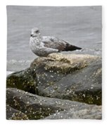 Seagull Sitting On Jetty Fleece Blanket