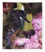 Seahorse3 Fleece Blanket