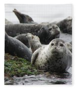 Seal Rock Fleece Blanket