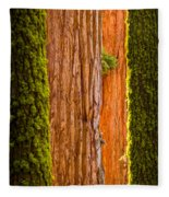 Sequoia Abstract Fleece Blanket