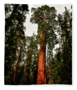 Sequoia In Kings Canyon Fleece Blanket