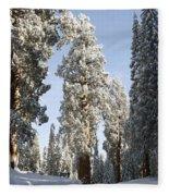 Sequoia National Park 4 Fleece Blanket