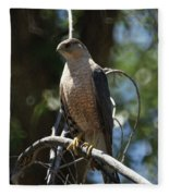 Sharp Shinned Hawk Fleece Blanket