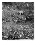 Sheep In Bw Fleece Blanket