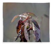 Shimmering Wings- Dragonfly Fleece Blanket