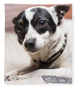 Shy Lonely Mini Fox Terrier Dog Laying On A Bed Fleece Blanket