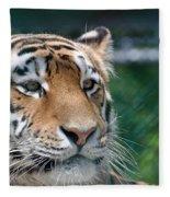 Siberian Tiger 2 Fleece Blanket