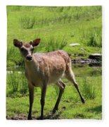 Sika Deer Water Hole Omagh Fleece Blanket