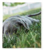 Silver Labrador Retriever  Fleece Blanket
