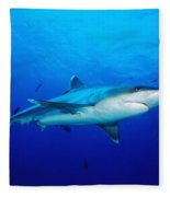 Silvertip Shark In Thailand Fleece Blanket