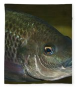Single Fish Swimming Fleece Blanket