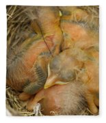 Sleeping Robins Fleece Blanket