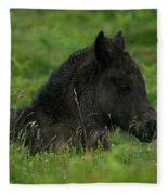 Sleepy Dartmoor Foal Fleece Blanket