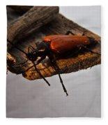 Sliding Beetle Fleece Blanket
