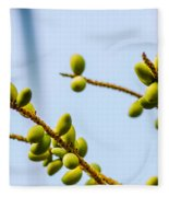 Small Coconuts I Fleece Blanket