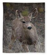 Small Fawn In Tombstone Fleece Blanket