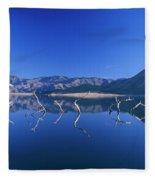 Snags- Lake Isabella Fleece Blanket