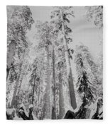 Snowy Sequoias At Calaveras Big Tree State Park Black And White 3 Fleece Blanket