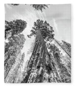 Snowy Sequoias At Calaveras Big Tree State Park Black And White 6 Fleece Blanket