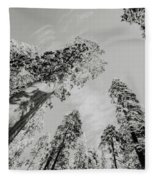 Snowy Sequoias At Calaveras Big Tree State Park Black And White 7 Fleece Blanket