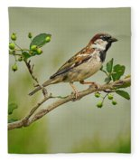 Song Sparrow Fleece Blanket