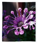South African Daisy Fleece Blanket