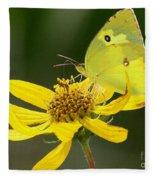 Southern Dogface Butterfly Fleece Blanket