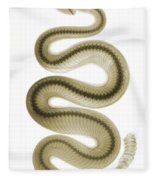 Southern Pacific Rattlesnake, X-ray Fleece Blanket
