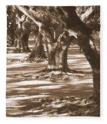 Southern Sunlight On Live Oaks Fleece Blanket