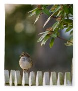 Sparrow In Colonial Williamsburg Fleece Blanket