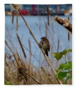 Sparrow On The Cattails Fleece Blanket