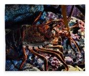 Spiney California Lobster Fleece Blanket