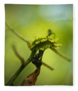 Spiny Oak Slug Moth 2 Fleece Blanket