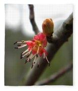 Spring Flower Closeup 1 Fleece Blanket
