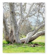 Spring Sycamore Tree Fleece Blanket