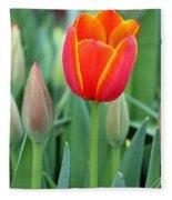 Spring Tulips 211 Fleece Blanket