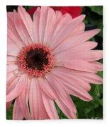 Square Framed Pink Daisy Fleece Blanket