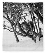 Squirrel In Low Branches Fleece Blanket