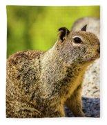 Squirrel On The Rock Fleece Blanket