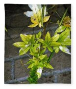 Stalk With Seed Pods Fleece Blanket