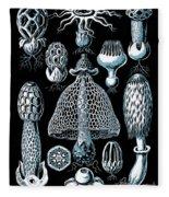 Stinkhorn Mushrooms Vintage Illustration Fleece Blanket