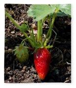 Strawberry Plant Fleece Blanket