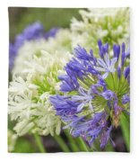 Striking Blue And White Agapanthus Flowers Fleece Blanket
