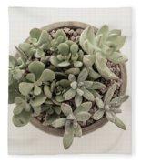 Succulent Plant From The Top Fleece Blanket