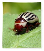 Sunflower Beetle Fleece Blanket