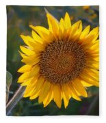 Sunflower - Facing East Fleece Blanket