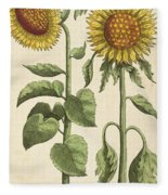 Sunflowers Illustration From Florilegium Fleece Blanket