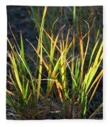 Sunlit Grass Fleece Blanket
