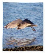 Sunlit Gull Wings Fleece Blanket