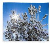 Sunshine Through Snow Covered Tree Fleece Blanket